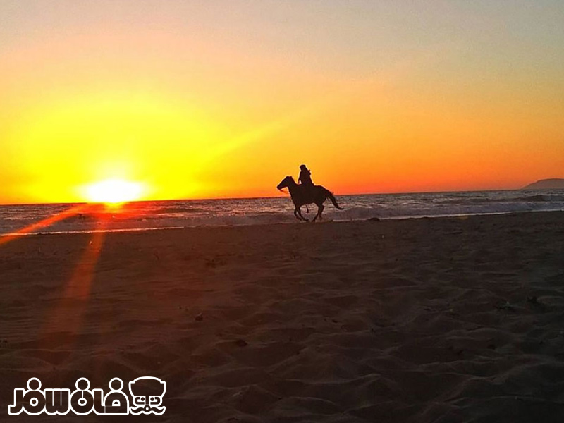اسب سواری و شتر سواری در نزدیکی کشتی یونانی